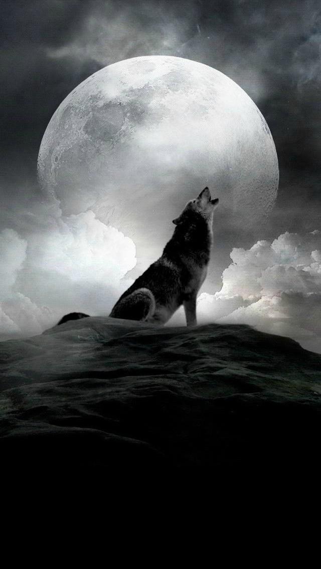 オオカミと月